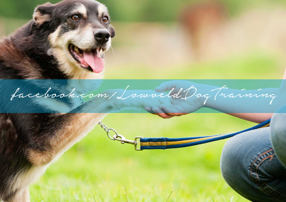 lowveld dog training on facebook